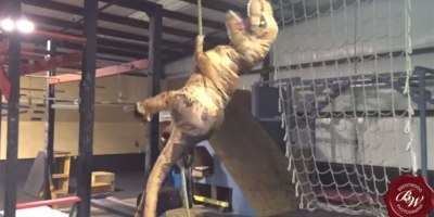 Guy in T-Rex Costume Tears Through American Ninja TrainingCourse