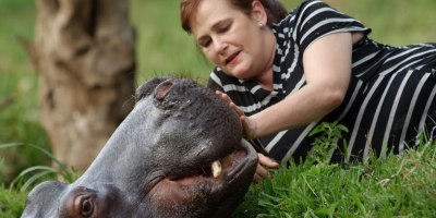 Separated at Birth, this Hippo Was Rescued and Raised by HumanParents