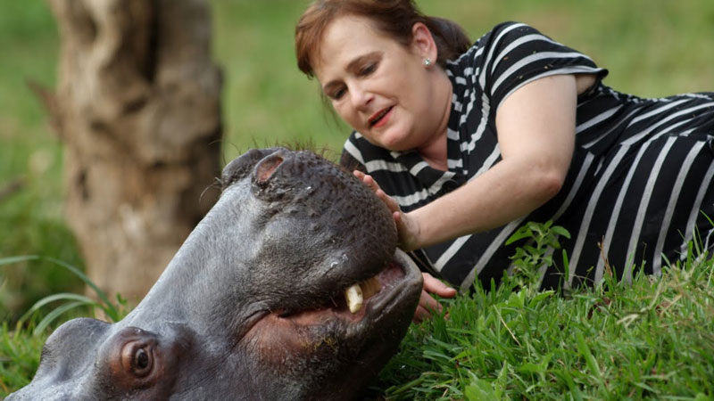 jessica-the-hippo-raised-by-human-parents