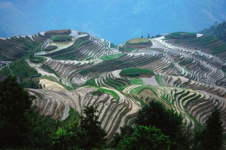 The Longsheng Rice Terraces of China