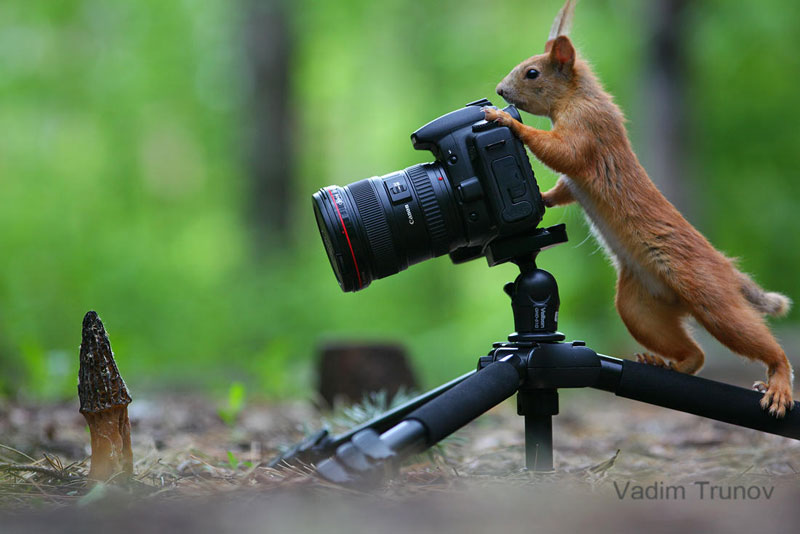 squirrel snowball fight photos by vadim trunov (4)