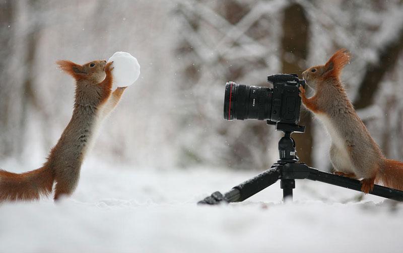squirrel snowball fight photos by vadim trunov (7)