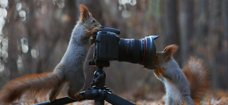 squirrel snowball fight photos by vadim trunov (9)