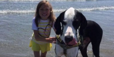 The Touching Story of Bella and Her Great Dane George