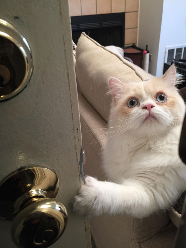 cat is sad when owner leaves (2)