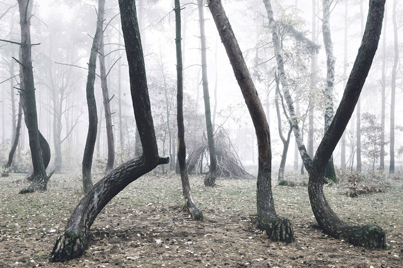 crooked forest in poland by Kilian Schoenberger (3)