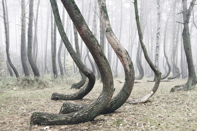 crooked forest in poland by Kilian Schoenberger (6)