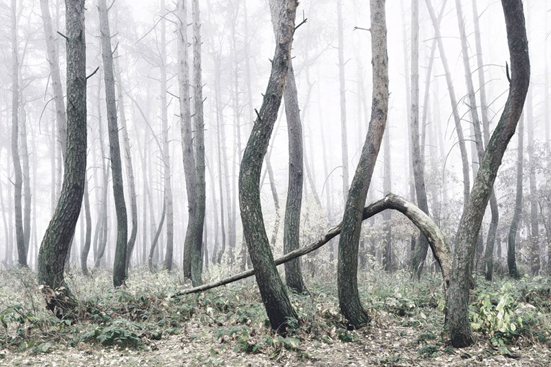 crooked forest in poland by Kilian Schoenberger (8)