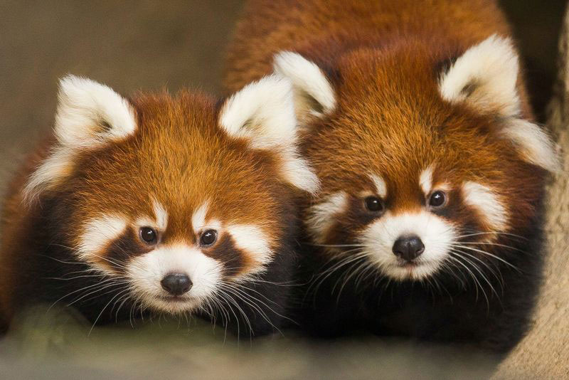 Meet the Cutest Cubs in Chicago (10Photos)
