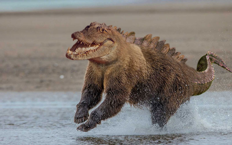 photoshopped animal hybrids (11)