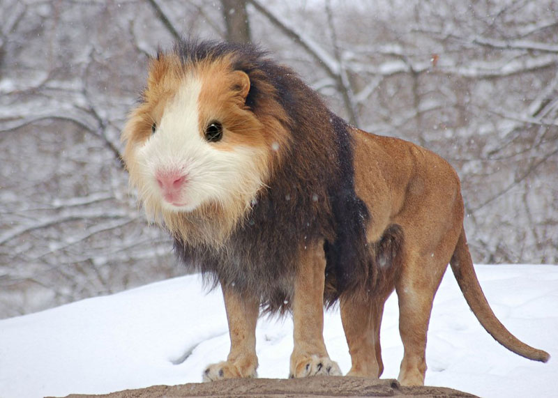 photoshopped animal hybrids (17)