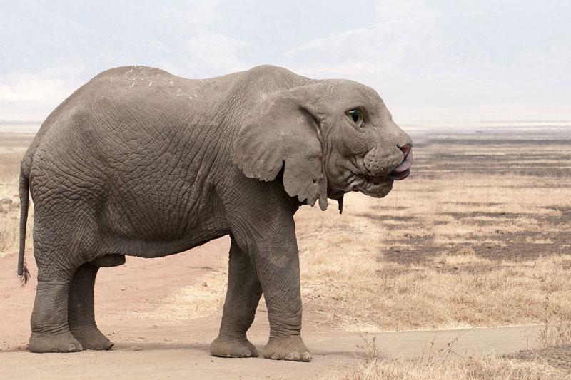 photoshopped animal hybrids (3)