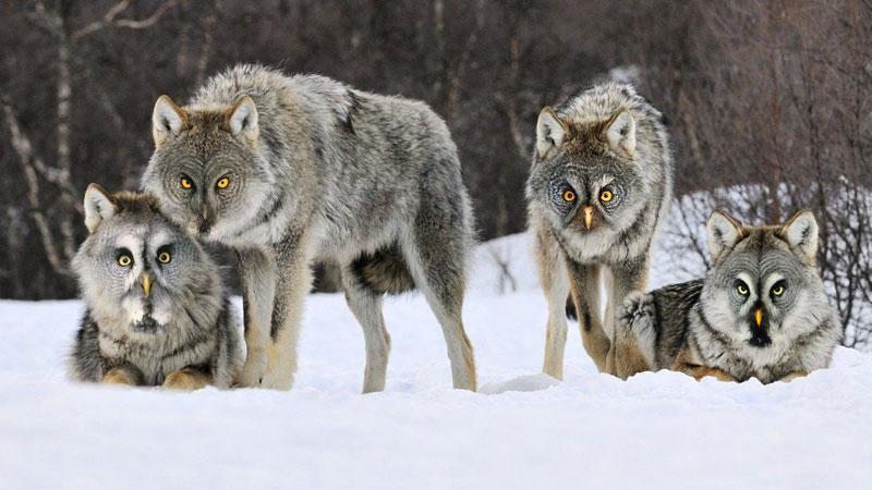 photoshopped animal hybrids (4)