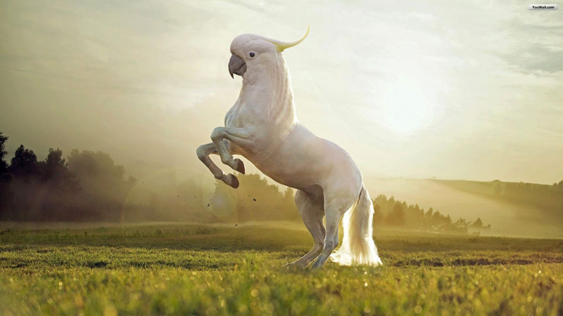 I'm Just Going to Leave these Photoshopped Animal Hybrids