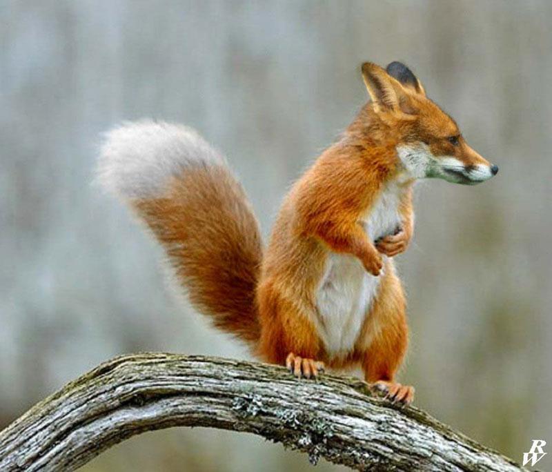 photoshopped animal hybrids (9)