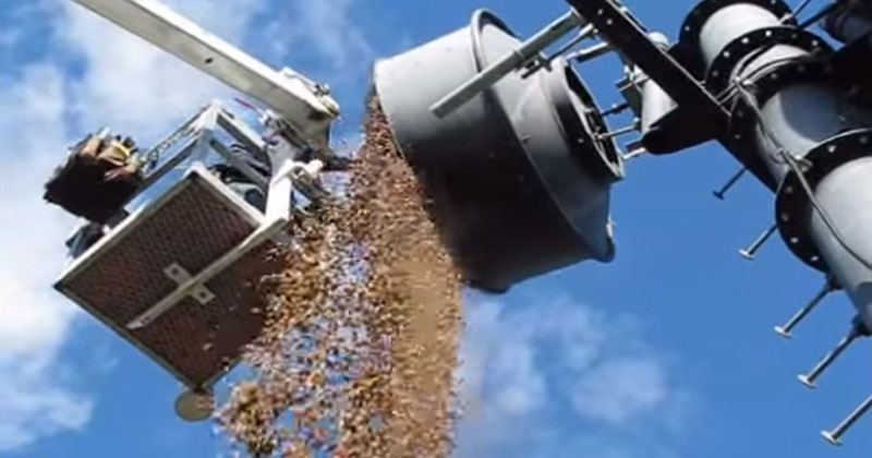 Look How Many Acorns Woodpeckers Stored in thisAntenna