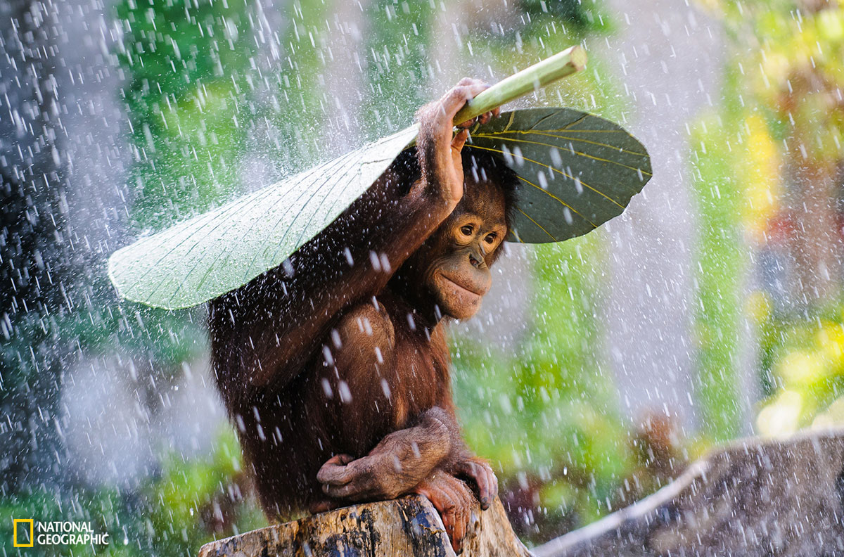The Winners from the 2015 National Geographic Photo Contest