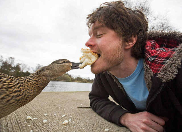 allan dixon animal selfies (2)