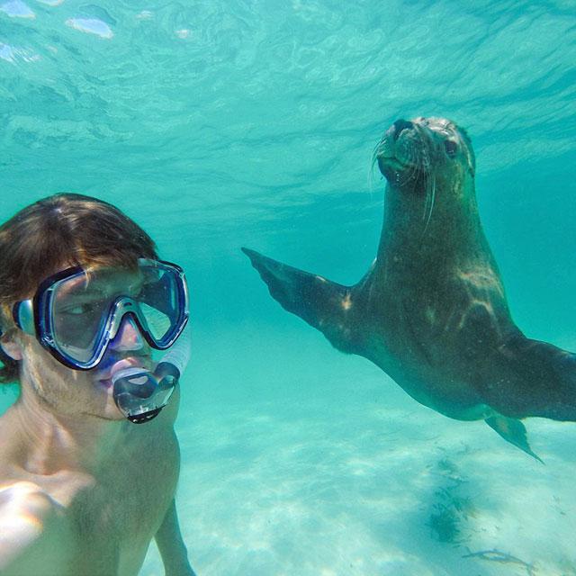 allan dixon animal selfies (3)