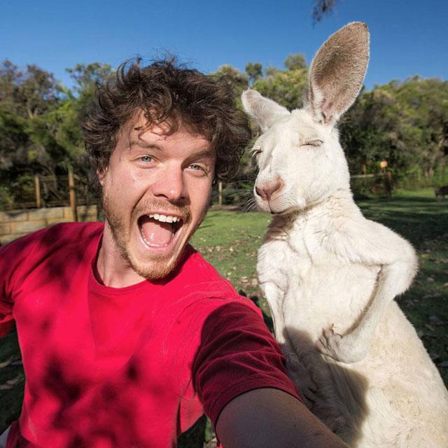 allan dixon animal selfies (4)