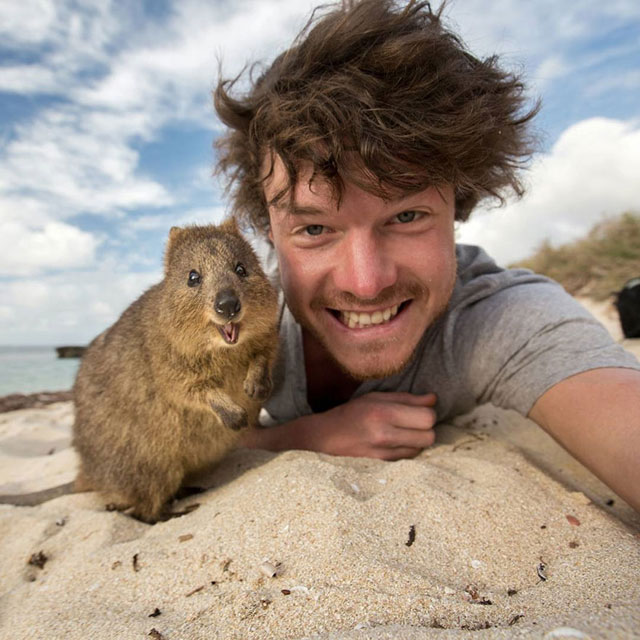 allan dixon animal selfies (5)