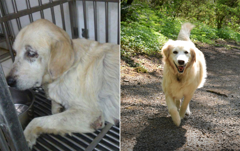 before and after photos of adopted dogs (5)