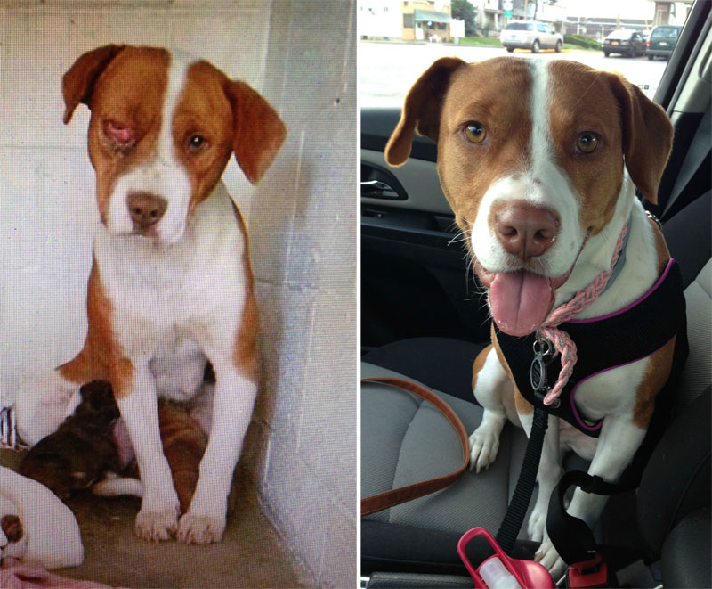 before and after photos of adopted dogs (9)