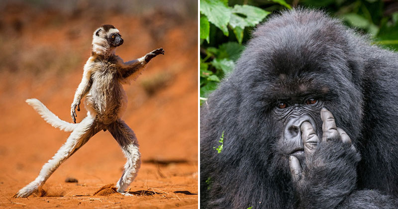 And the Winners of the 2015 Comedy Wildlife Photography Awards Are… (13Photos)