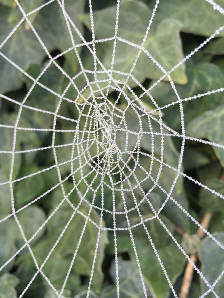 Picture of the Day: Frosted SpiderWeb