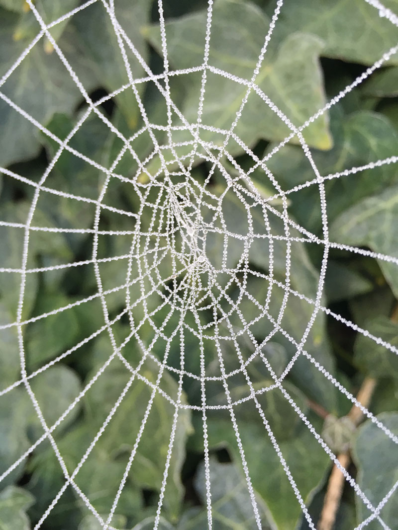 frosted spider web by deanna hoyt Picture of the Day: Frosted Spider Web