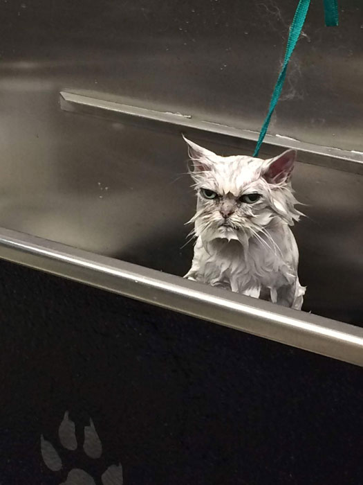 angry cat mad upset funny wet