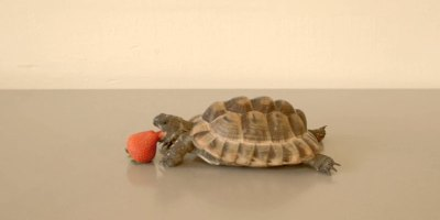 Alan Rickman's Final Role Was the Voiceover of this Tortoise Eating aStrawberry