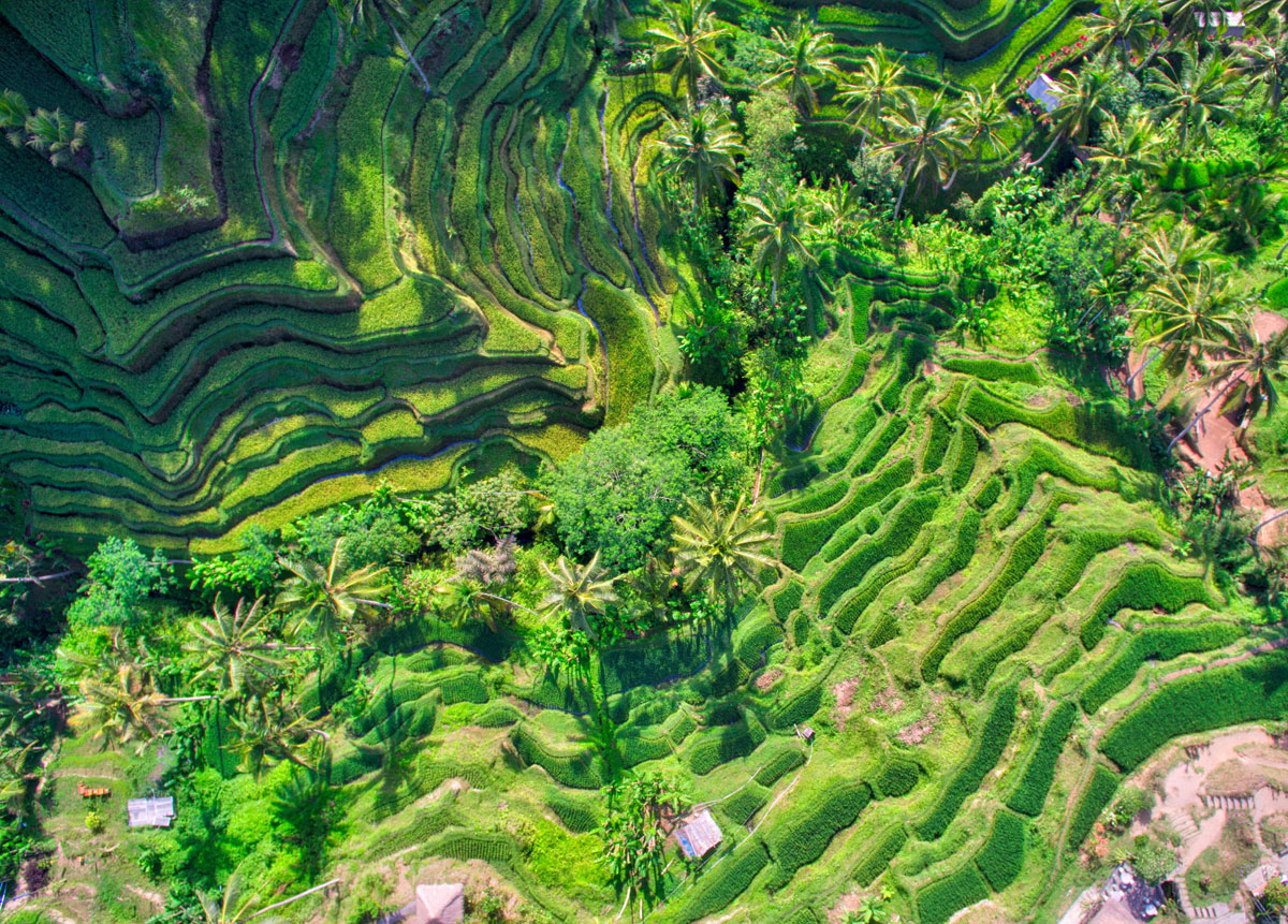 bali-rice-fields-from-above-by-trey-ratcliff «TwistedSifter