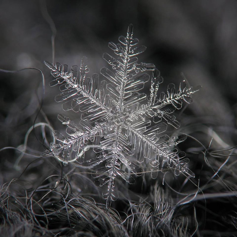 Close-Ups of Individual Snowflakes from this Winter by chaoticmind75 (1)