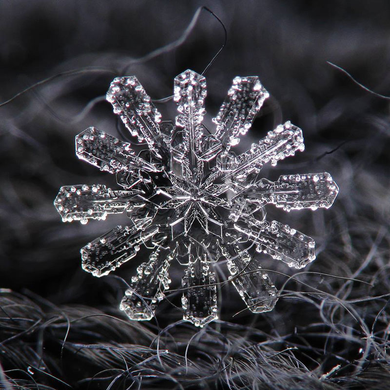 Close-Ups of Individual Snowflakes from this Winter by chaoticmind75 (2)