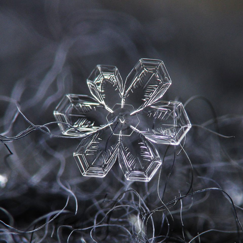 Close-Ups of Individual Snowflakes from this Winter by chaoticmind75 (6)