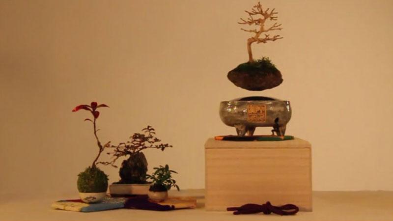floating air bonsai by hoshinchu on kickstarter (11)