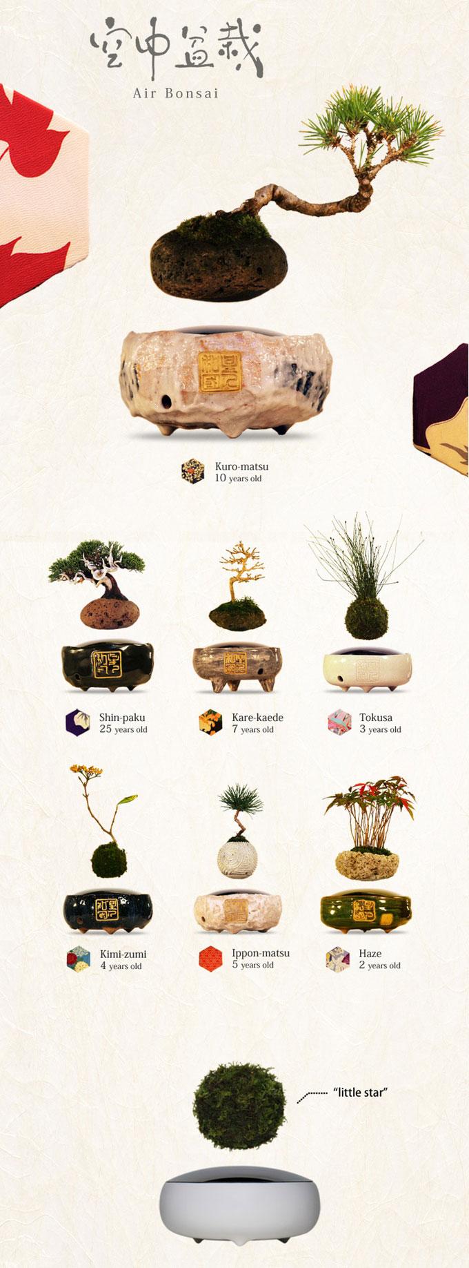 floating air bonsai by hoshinchu on kickstarter (2)