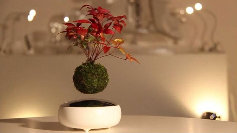 floating air bonsai by hoshinchu on kickstarter (4)