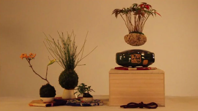 floating air bonsai by hoshinchu on kickstarter (6)