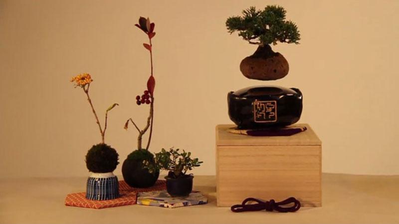 floating air bonsai by hoshinchu on kickstarter (8)