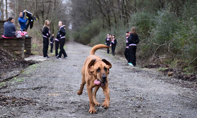 ludivine hound dog runs half marathon comes 7th alabama (1)