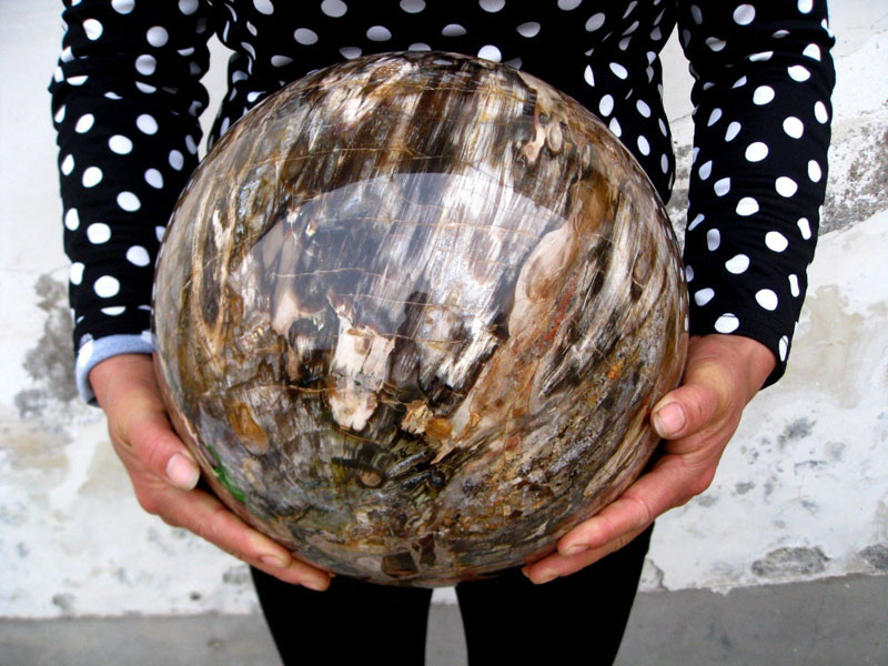 polished sphere of petrified wood Picture of the Day: Polished Sphere of Petrified Wood