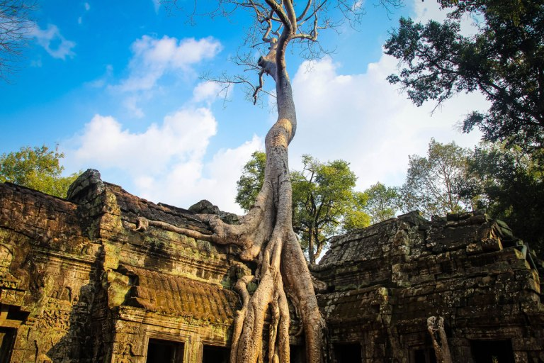 ta prohm temple angkor siem reap cambodia Picture of the Day: Ta Prohm Temple, Cambodia