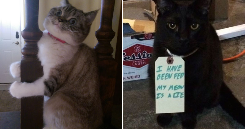 The Shirk Report – Volume 358