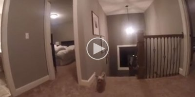 Dad Gives Son a GoPro During a Game of Hide and Seek and Discovers His SecretWeapon