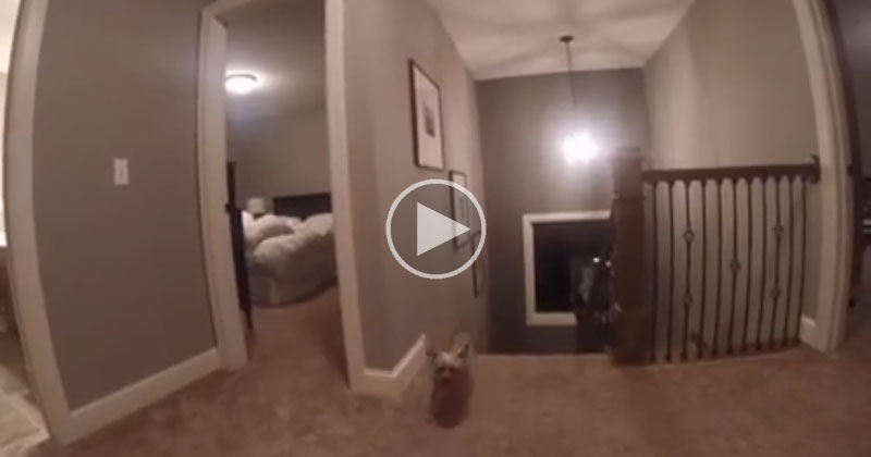 Dad Gives Son a GoPro During a Game of Hide and Seek and Discovers His Secret Weapon
