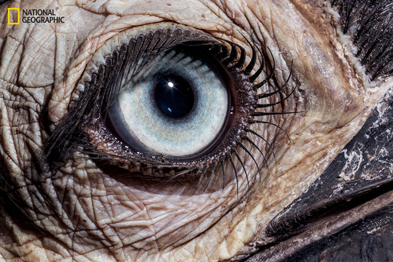 evolution_of_eyes_ngm_022016_MM8355_002