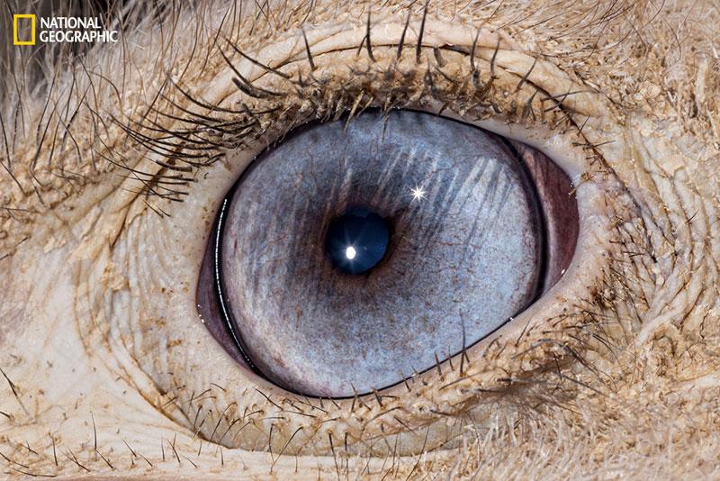 evolution_of_eyes_ngm_022016_MM8355_012