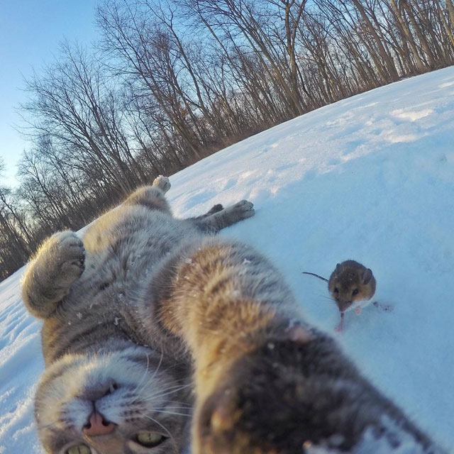 manny the cat takes better selfies than you (10)